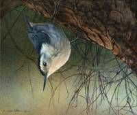nuthatch inverted