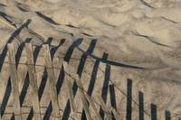 Dune Fence and Sand