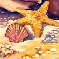 Starfish and Shell