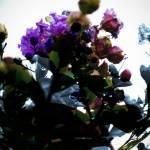"""""""Crepe Myrtle Sphere"""" by MelanieDoty"""