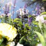 """Botanical Gardens Upscape"" by Sari_McNamee"