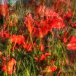 """Poppystance"" by Sari_McNamee"
