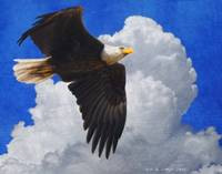 blue sky bald eagle