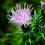 """""""Thistluminous"""" by ImageMonkey"""