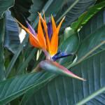 """Bird of Paradise"" by mematera"