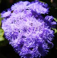 Splash of Purple Flowers