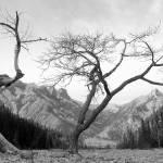 """Kan. Tree"" by SullivansPhotoSnacks"