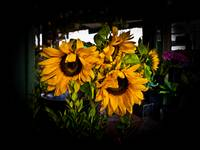 Sunflowers @ The Pike Place Market