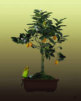 Kumquat Bonsai and Parakeet