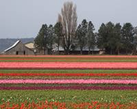 Skagit Valley Field