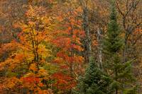 Algonquin Colors