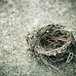 """Empty Nest"" by julieann"