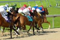 Passing Us By   -    Thoroughbred Horse Racing