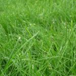 """Swirl of Grass"" by teresaruskowski"