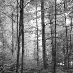 """Purple Woods"" by TashaGammon"
