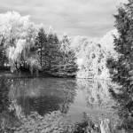 """""""Pond of Serenity"""" by TashaGammon"""