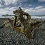 """Driftwood on Rialto Beach 148"" by RandallNyhof"