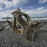 """Driftwood on Rialto Beach 0170"" by RandallNyhof"