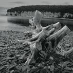 """Fayette Tree Stump"" by RandallNyhof"