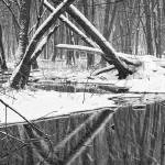 """Winter Stream 52 BW Pan"" by RandallNyhof"