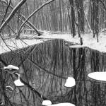 """Winter Stream 057 BW Vertical"" by RandallNyhof"