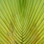 """Symetric Palm leaf. Singapore"" by OJPHOTOS"