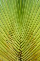 Symetric Palm leaf. Singapore