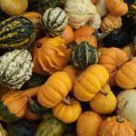 """""""Pumpkin Gourd Medley"""" by SederquistPhotography"""