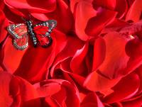 Red rose petals and butterfly