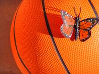 Orange basketball and butterfly