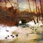 """""""Winter Geese"""" by JessicaJenney"""