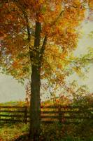 OCTOBER 20 2010 FOOGY TREES AUTUMN37-1