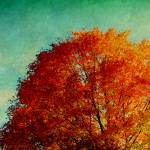 """October 27 2010  TREES"" by manymuses"
