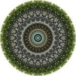 """Cactus Mandala"" by annesmandalas"