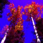 """Dual Apsens Abstracted Color"" by davidflurkey"