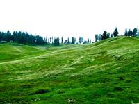Blanket of Flowers at Gulmarg