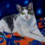 """Grey and White Cat"" by mozache"