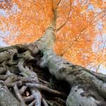 """Root of the Matter"" by geoffallen"