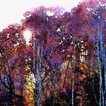 """autumn"" by pietrastone"