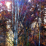 """fall foliage3"" by pietrastone"