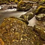 """""""Ardgartan, Argyll Forrest, Scotland"""" by andy-littlejohn"""