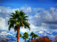 Tucson palm trees and Mt. Lemmon snow