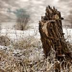 """The Tree Stump"" by georgefairbairnphotograph"