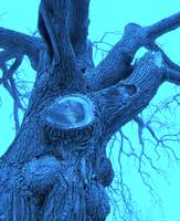 blue tree trunk