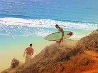 Surfers at Blacks Beach