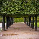"""Tunnel of Trees, Dresden Germany"" by JohnnyKurtz"