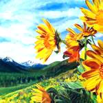 """Montana Sunflowers"" by connieelaine"