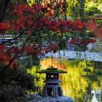 """Japanese Garden"" by frankacaba"