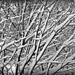 """Winter Monochrome"" by paulcausie"
