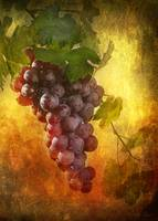Tuscany grapes